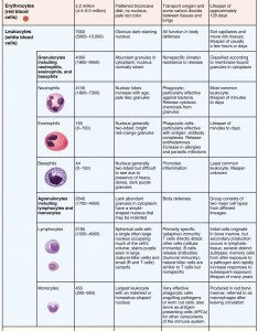 This table shows the different types of cells present in blood number also erythrocytes anatomy and physiology ii rh coursesmenlearning