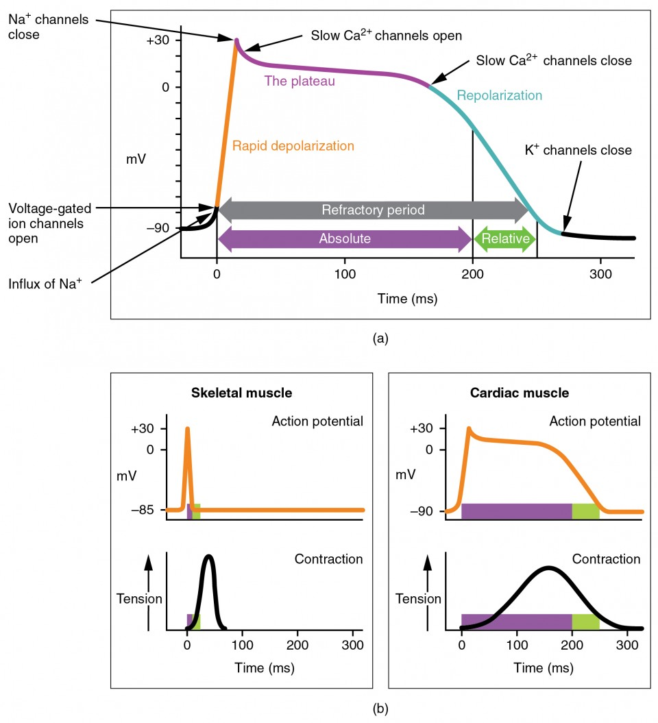 hight resolution of the top panel of this figure shows millivolts as a function of time with the various