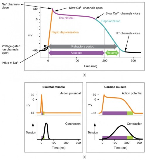 small resolution of the top panel of this figure shows millivolts as a function of time with the various