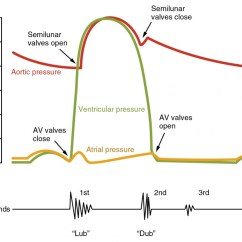 Labeled Ekg Diagram Asco 8210 Wiring Cardiac Cycle Anatomy And Physiology Ii This Image Shows A Graph Of The Blood Pressure With Different Stages Under