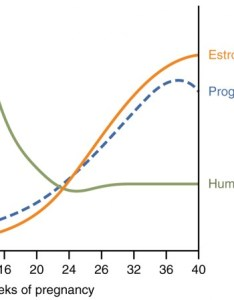 graph hormone concentration versus week of pregnancy shows how three hormones vary throughout also maternal changes during labor and birth anatomy rh coursesmenlearning