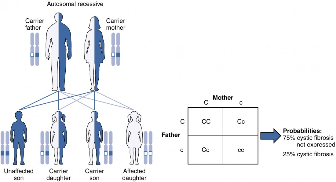 Patterns of Inheritance | Anatomy and Physiology II