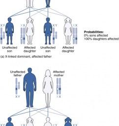 x linked dominant inheritance [ 820 x 1324 Pixel ]