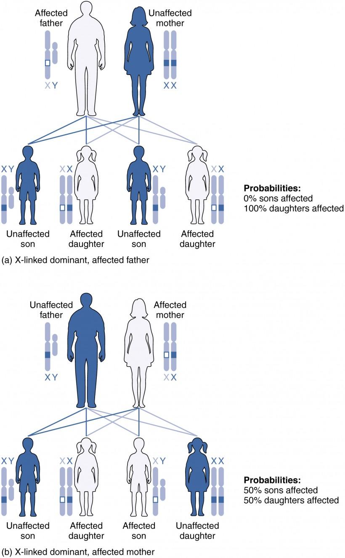 hight resolution of x linked dominant inheritance