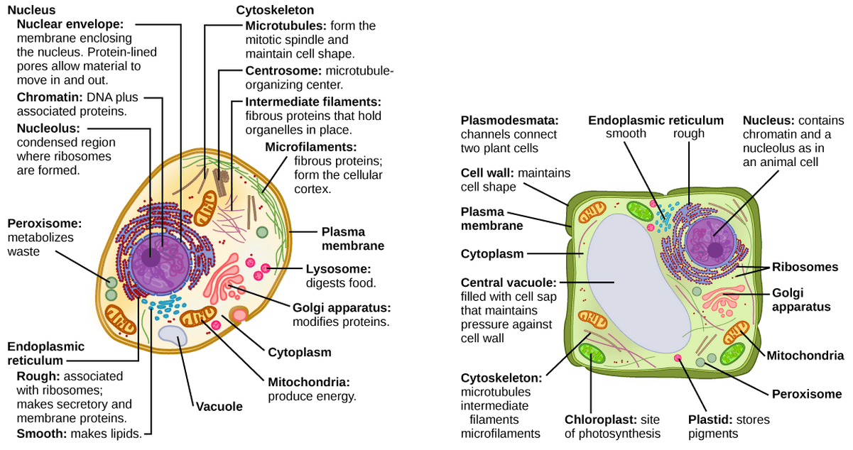 Organelles Biology For Non Majors I