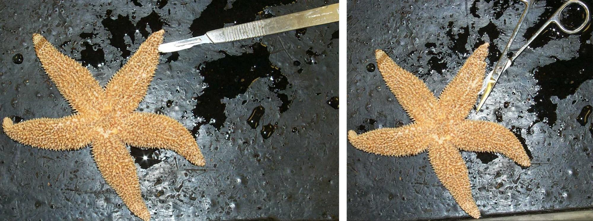 hight resolution of starfishcuts