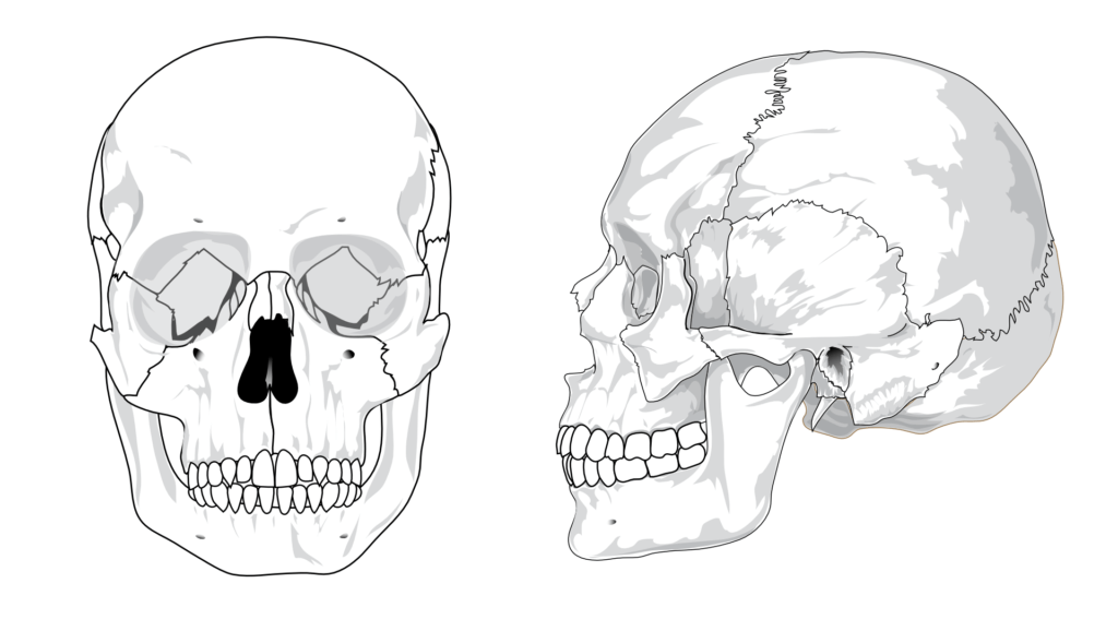 unlabeled skull diagram inferior view motor wiring 12 lead the bones of | human anatomy and physiology lab (bsb 141)
