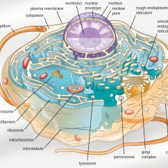 Cell Structure And Function Diagram Nfhs Shot Put Layout Preface Microbiology
