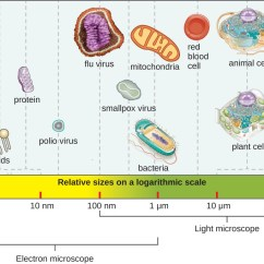 Microbiology Prokaryotic Cell Diagram Labeled Human Skeleton For Kids Types Of Microorganisms A Bar Along The Bottom Indicates Size Various Objects At Far Right Is Figure 1