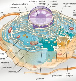 a diagram of a large cell the outside of the cell is a thin line [ 1300 x 1054 Pixel ]