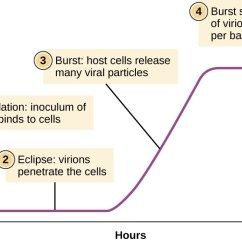 Basic Virus Diagram Home Theater Speaker Wiring The Viral Life Cycle Microbiology Growth Curve
