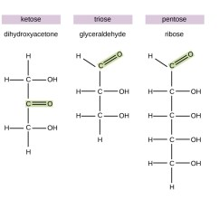 Carbohydrate Structure Diagram Single Pole Dimmer Switch Wiring Uk Carbohydrates Microbiology