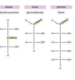 diagrams of various monosaccharides glyceraldehyde is an aldose because it has a double bonded o [ 1300 x 796 Pixel ]