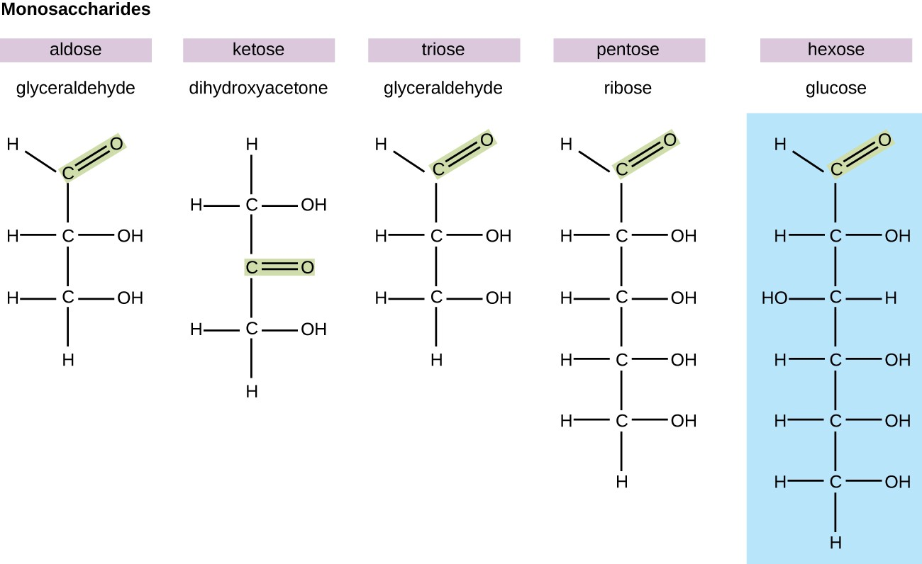 hight resolution of diagrams of various monosaccharides glyceraldehyde is an aldose because it has a double bonded o