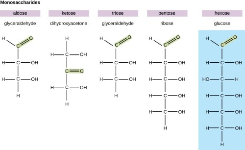 small resolution of diagrams of various monosaccharides glyceraldehyde is an aldose because it has a double bonded o