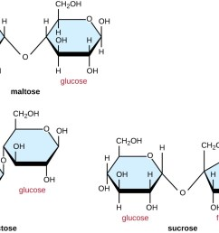 maltose is made of 2 glucose molecules linked with o from carbon 4 of one glucose [ 1098 x 754 Pixel ]