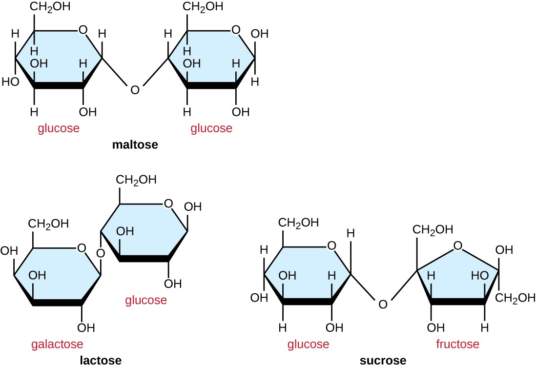 hight resolution of maltose is made of 2 glucose molecules linked with o from carbon 4 of one glucose
