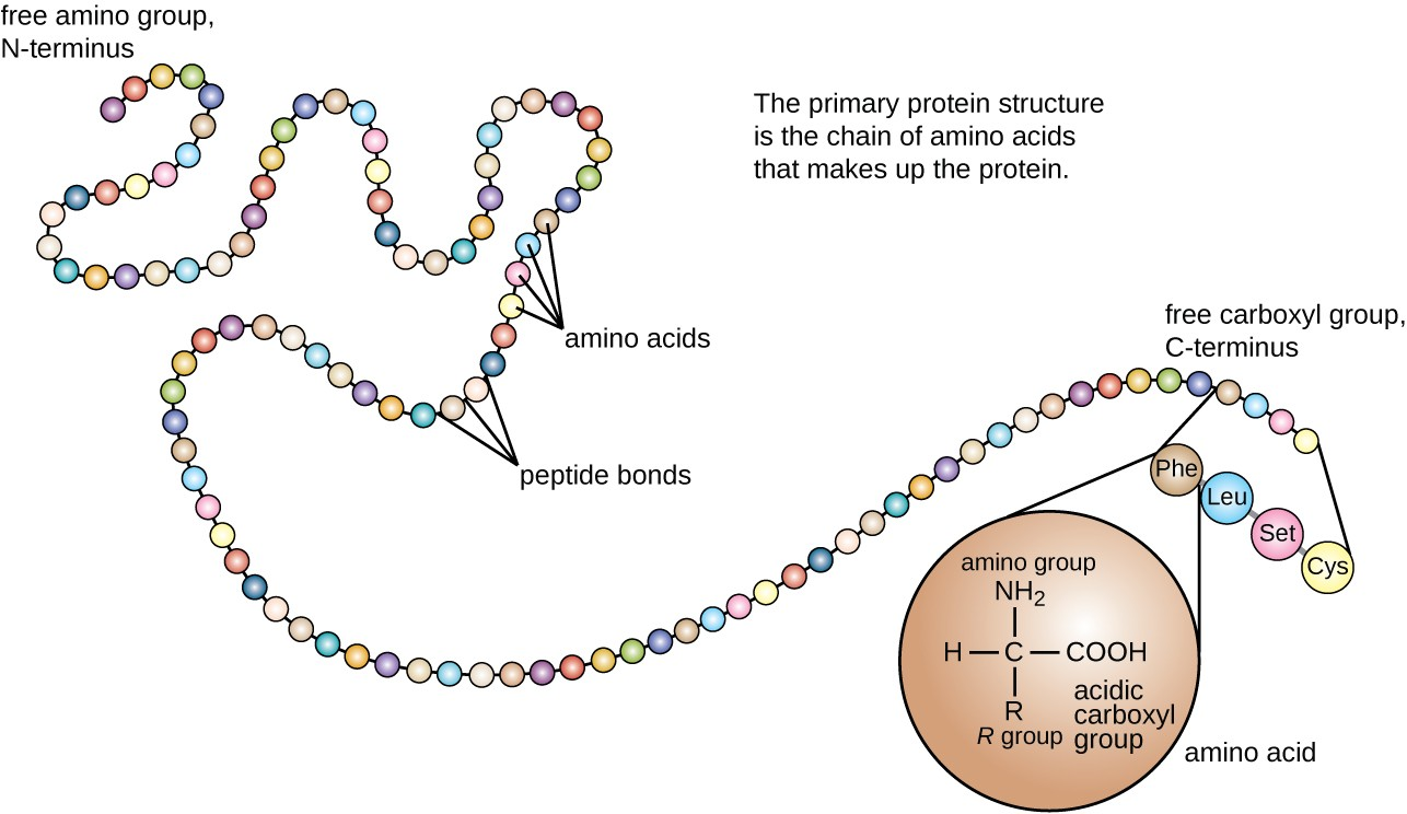hight resolution of protein structure