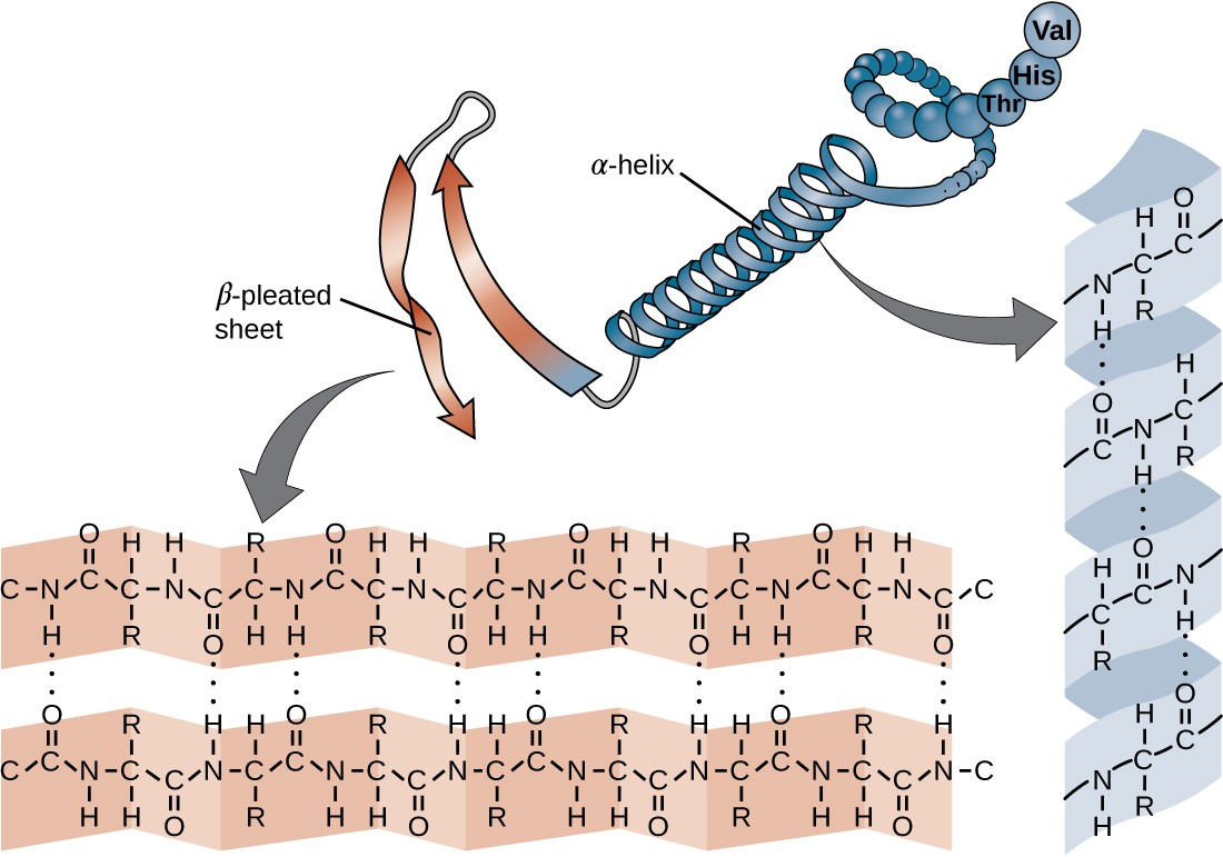 Proteins  Microbiology