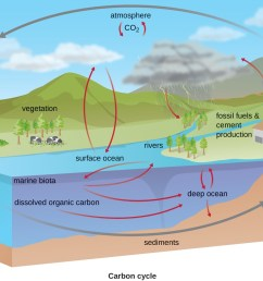 the carbon cycle co2 from the atmosphere moves into plants soils surface ocean [ 1300 x 914 Pixel ]