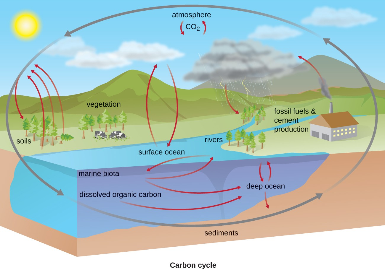 hight resolution of the carbon cycle co2 from the atmosphere moves into plants soils surface ocean