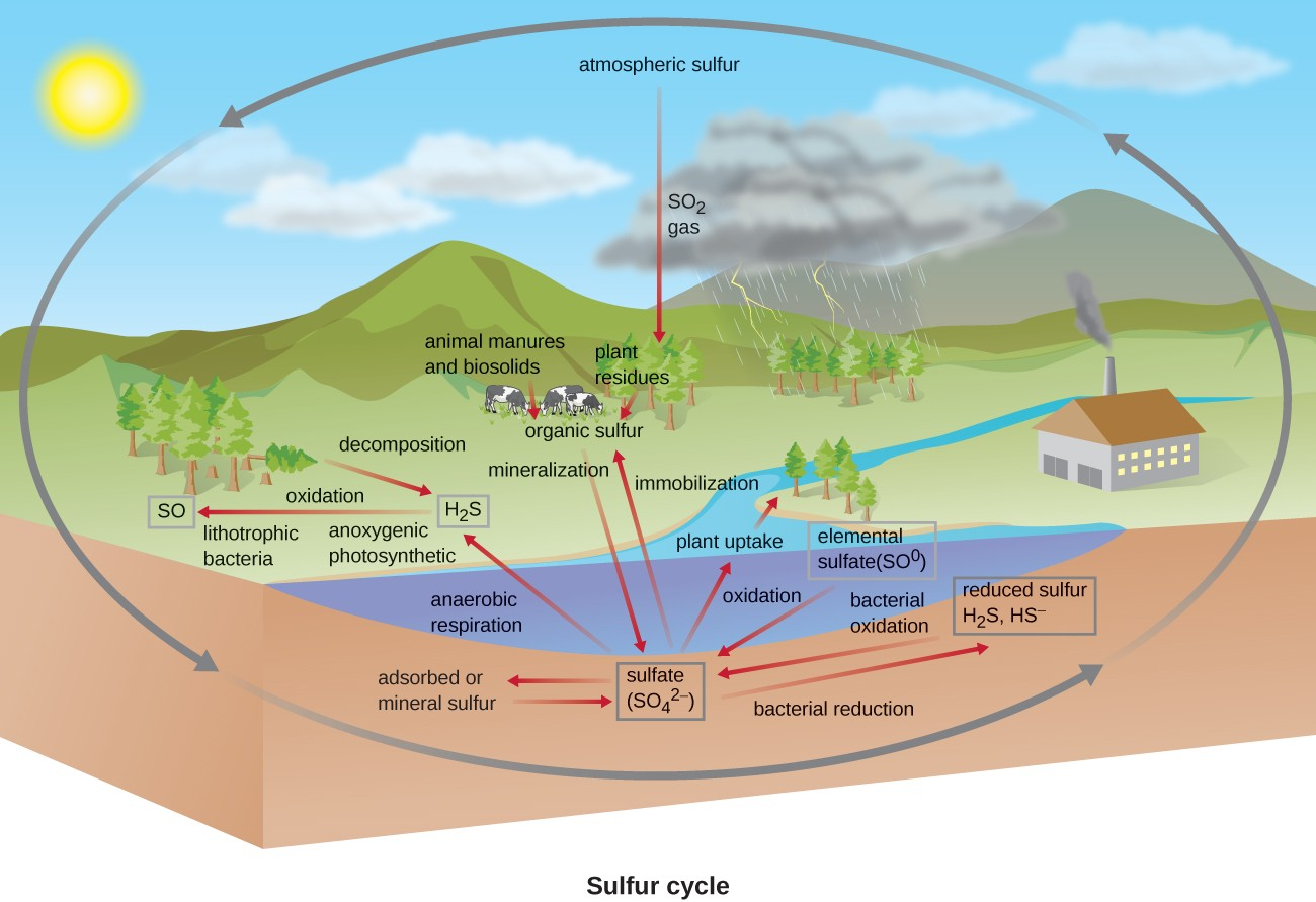 hight resolution of sulfur cycle atmospheric sulfur so2 gas is taken in by plants plant