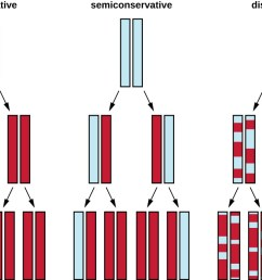 diagram showing 3 models of dna replication in the conservative model the original double helix [ 1298 x 720 Pixel ]