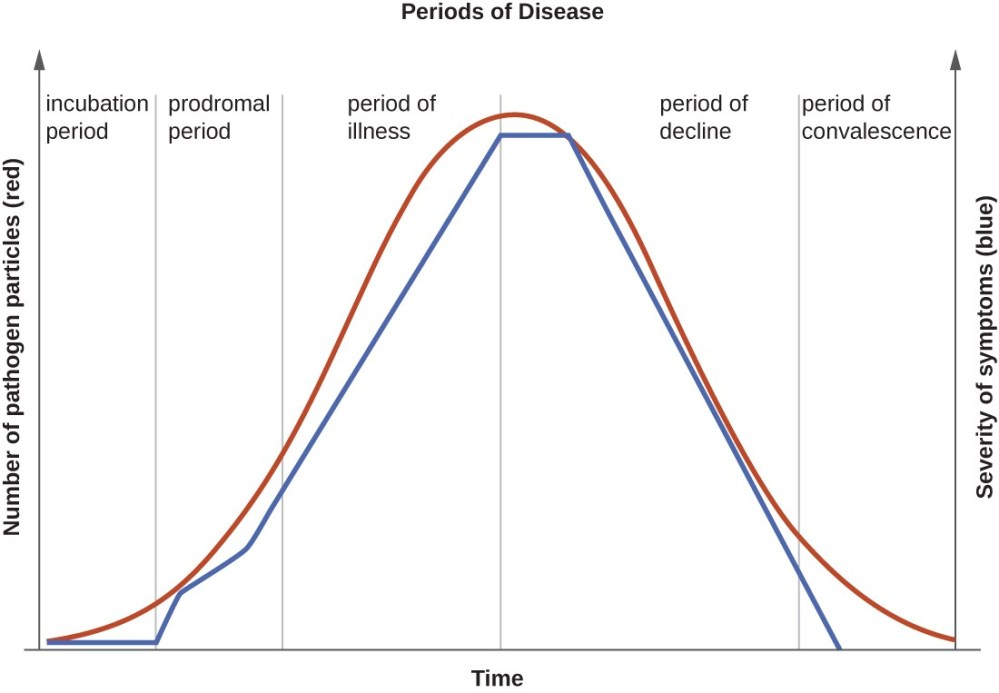 medium resolution of a graph titled periods of disease with time on the x axis and two