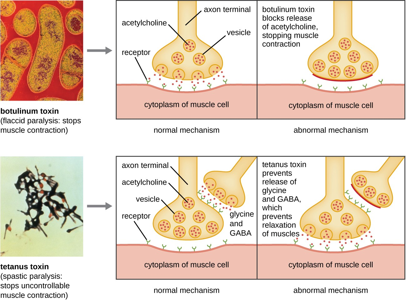 Virulence Factors Of Bacterial And Viral Pathogens