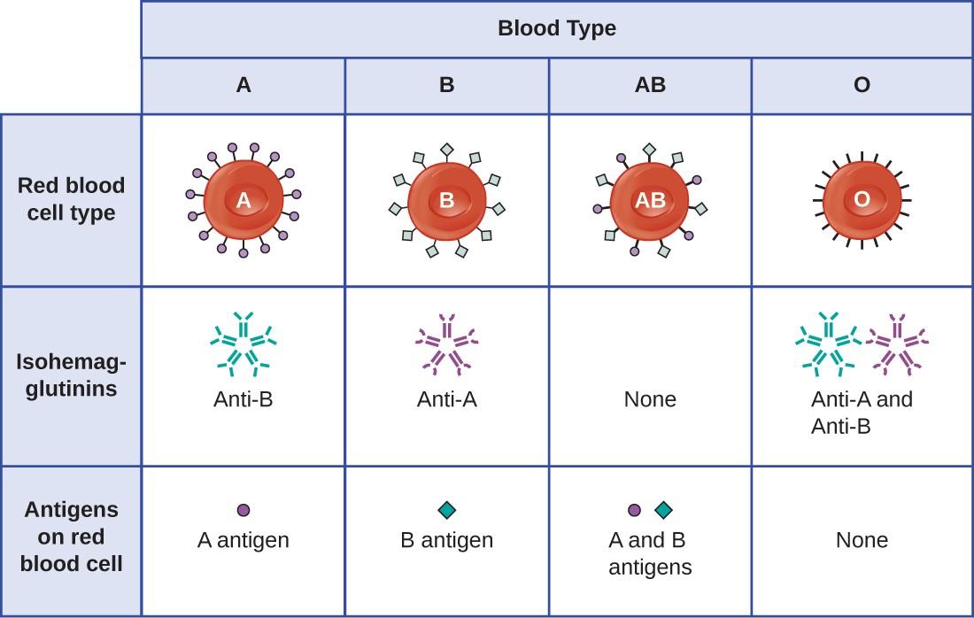 Hypersensitivities | Microbiology