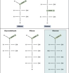 the molecular structures of glyceraldehyde an aldose and dihydroxyacetone a ketose are [ 800 x 1077 Pixel ]