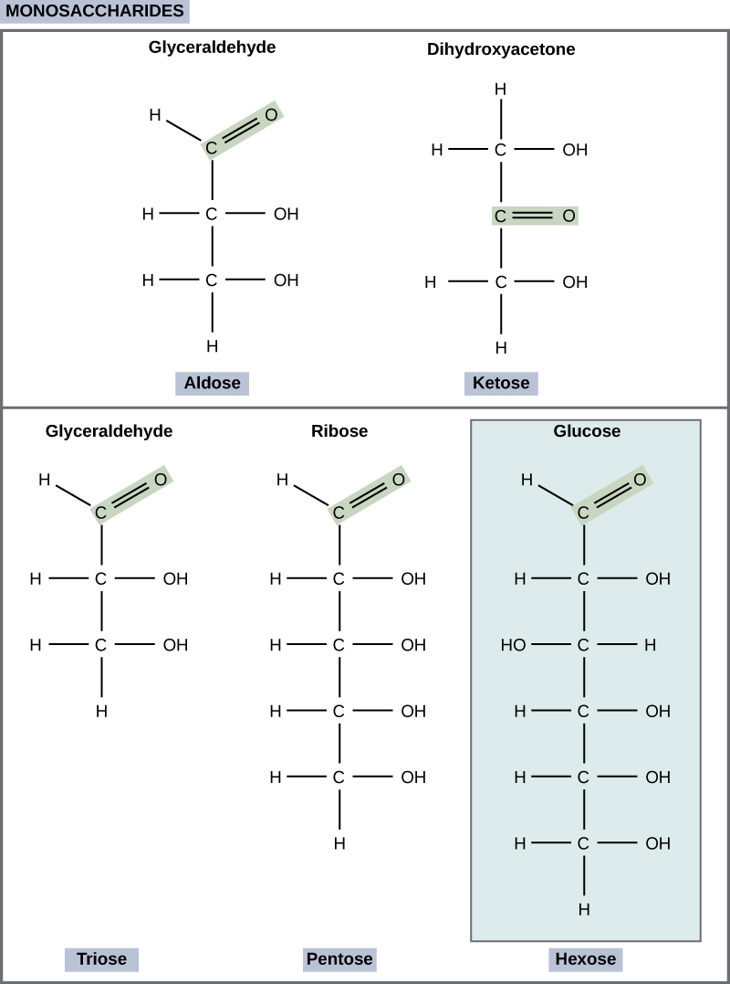 hight resolution of the molecular structures of glyceraldehyde an aldose and dihydroxyacetone a ketose are