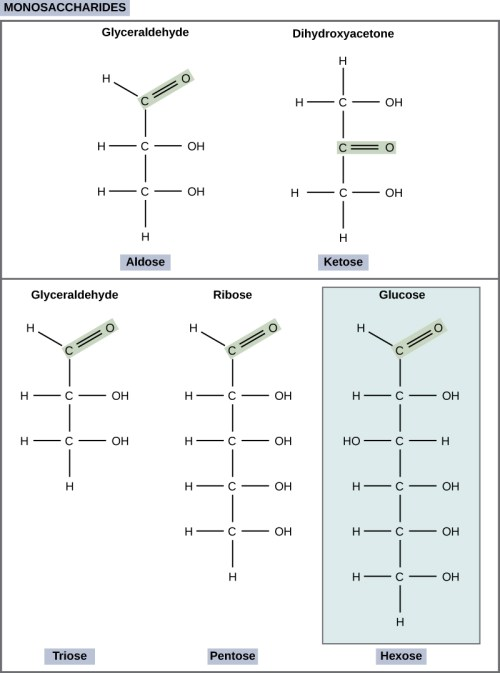small resolution of the molecular structures of glyceraldehyde an aldose and dihydroxyacetone a ketose are