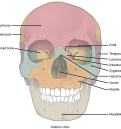 illustration shows a front end view of a skull the frontal bone is the [ 1115 x 743 Pixel ]