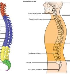 the vertebral column [ 1117 x 906 Pixel ]