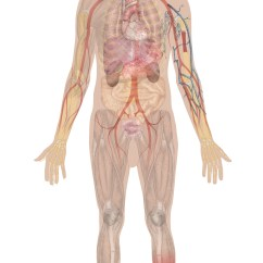 Make A Diagram Danfoss Vfd Wiring Why It Matters: Overview Of Body Systems | Biology For Majors Ii