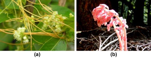 Heterotrophic Plants Biology Majors Ii