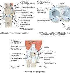 this image shows the different views of the knee joint the top left panel [ 1024 x 816 Pixel ]