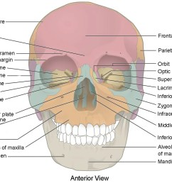 this image shows the anterior view from the front of the human skull  [ 1129 x 812 Pixel ]