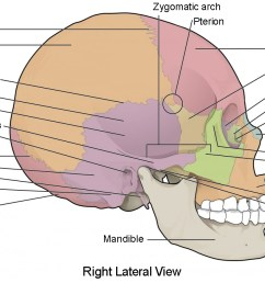 this image shows the lateral view of the human skull and identifies the major parts  [ 1192 x 674 Pixel ]