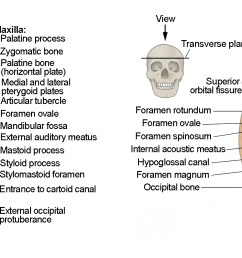 this image shows the superior and inferior view of the skull base in the top figure 6  [ 2495 x 824 Pixel ]
