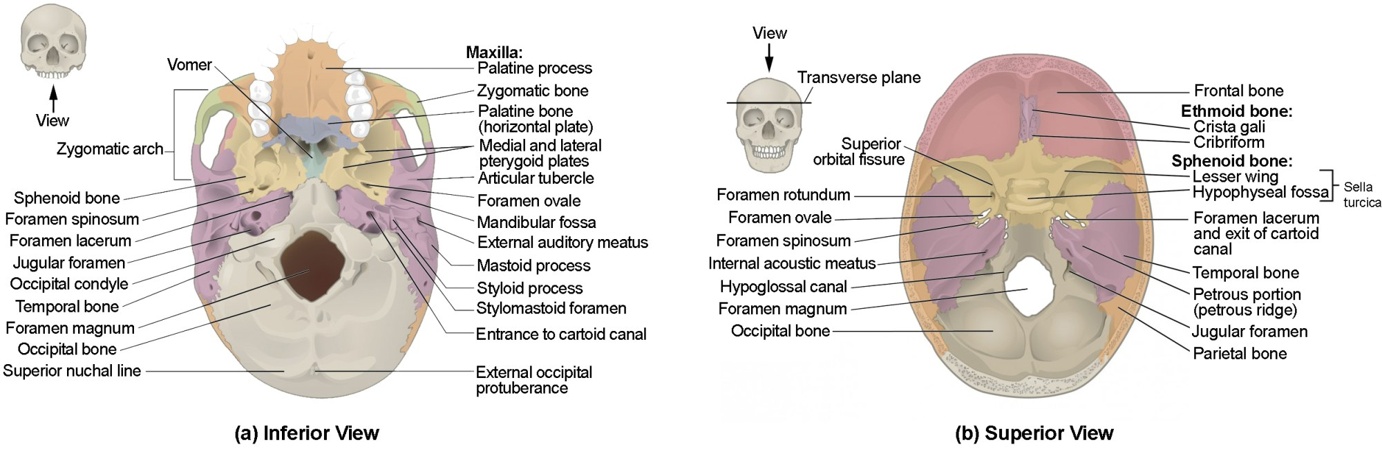 hight resolution of this image shows the superior and inferior view of the skull base in the top figure 6