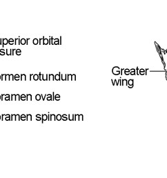 this image shows the location and structure of the sphenoid bone a small image of [ 1781 x 488 Pixel ]