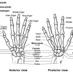 Wrist And Hand Unlabeled Diagram 2008 Pontiac Montana Radio Wiring Bones Of The Upper Limb Anatomy Physiology I This Figure Shows In Joints Left Panel