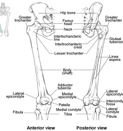 this diagram shows the bones of the femur and the patella the left panel shows [ 1110 x 1044 Pixel ]