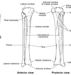 this image shows the structure of the tibia and the fibula the left panel shows [ 1131 x 881 Pixel ]