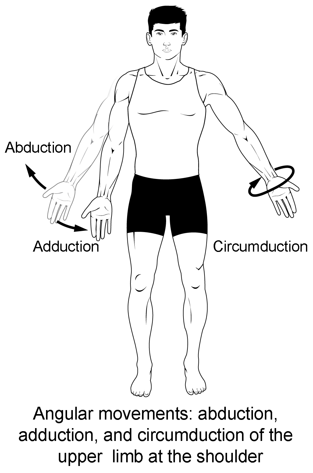 movements allowed by synovial joints diagram 3 way switch wiring more than one light types of body anatomy and physiology i