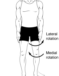 This multi part image shows different types of movements that are possible by joints also body anatomy and physiology  rh coursesmenlearning