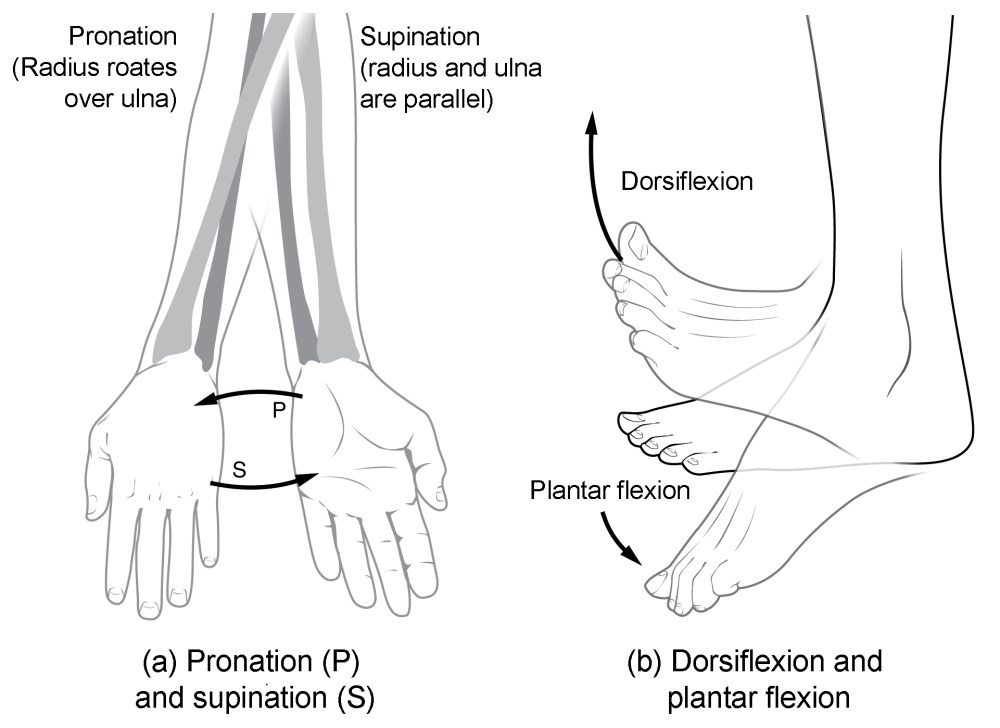 medium resolution of this multi part image shows different types of movements that are possible by different joints