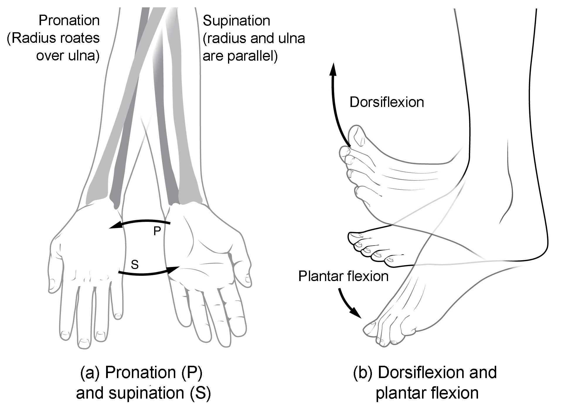 hight resolution of this multi part image shows different types of movements that are possible by different joints